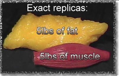 5 lb fat muscle